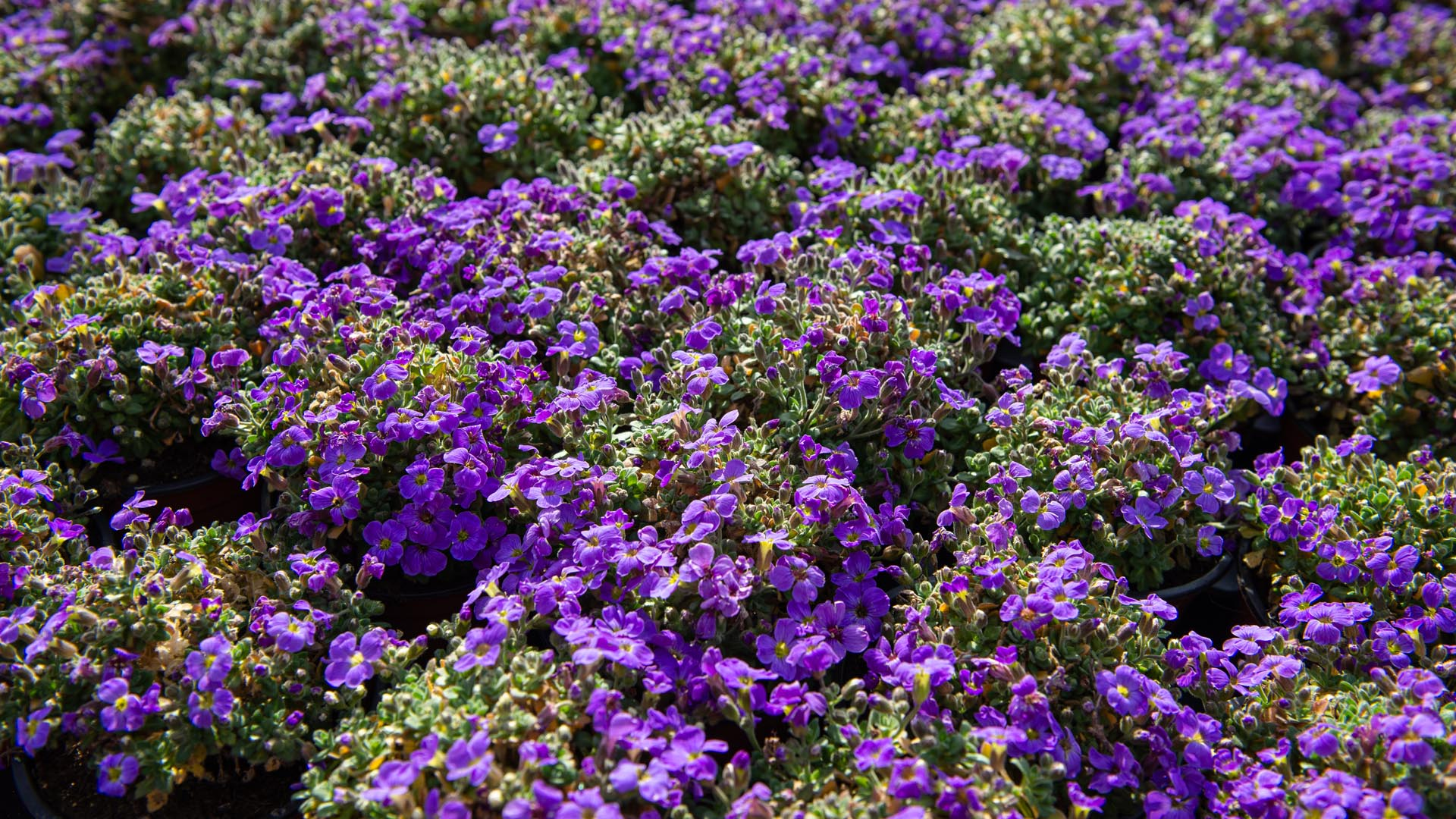 017_039_AUBRIETA 'Audrey Light Blue'_0873_vag.jpg